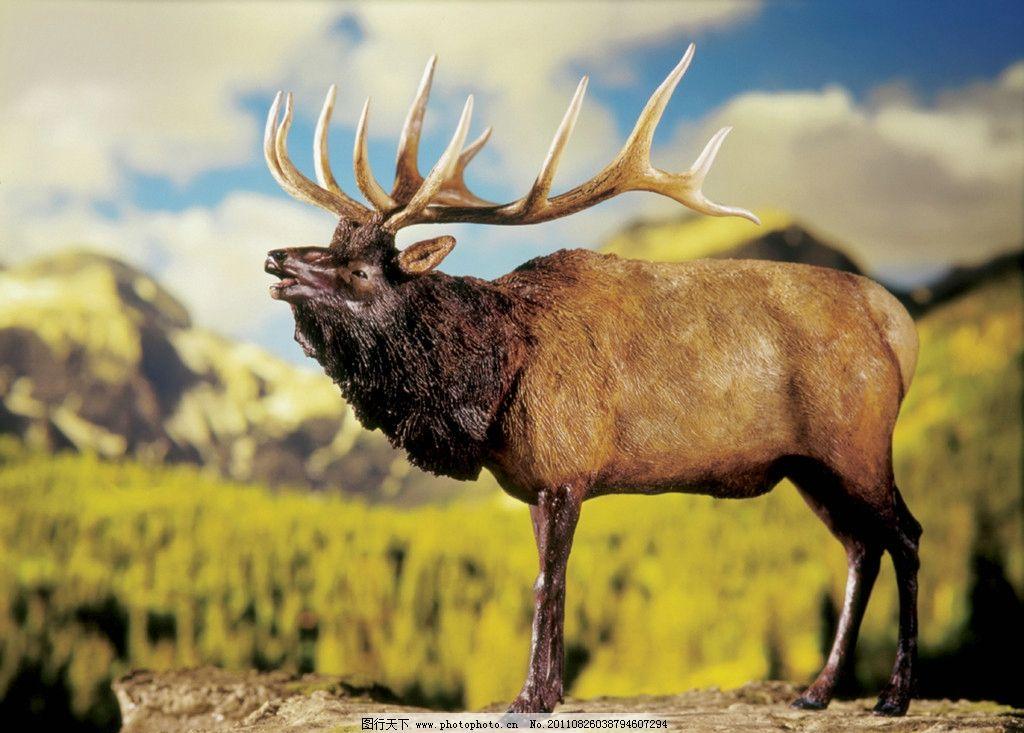 史前鹿 雕像 动物雕像 生物馆 摄影 美术绘画