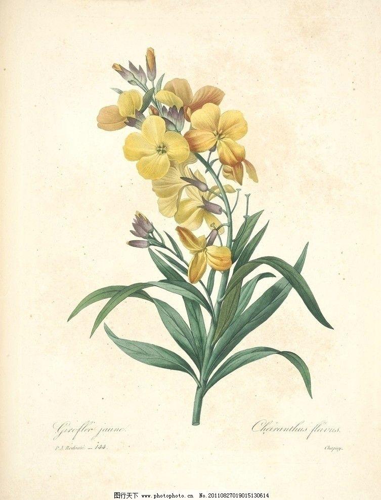 兰花 兰草 植物 花 水彩 图谱 手绘 画 植物圣经 绘画书法 文化艺术