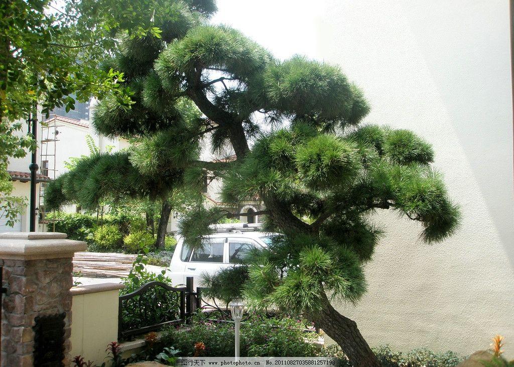 经济型别墅盆景