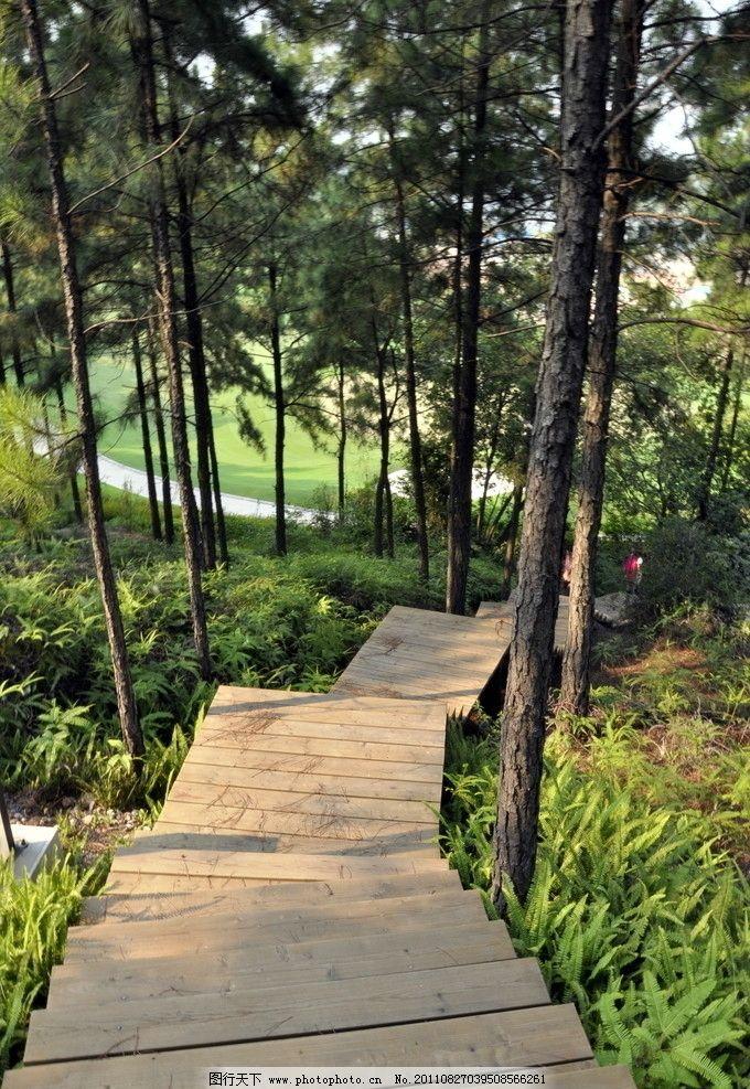 森林 木道图片