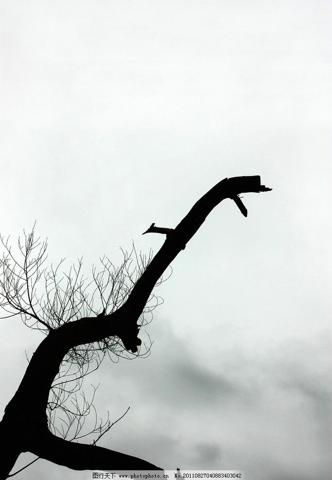 树干剪影 树干 树枝 剪影 力量 生机勃勃 奋发 坚持 不服输 天空 云朵