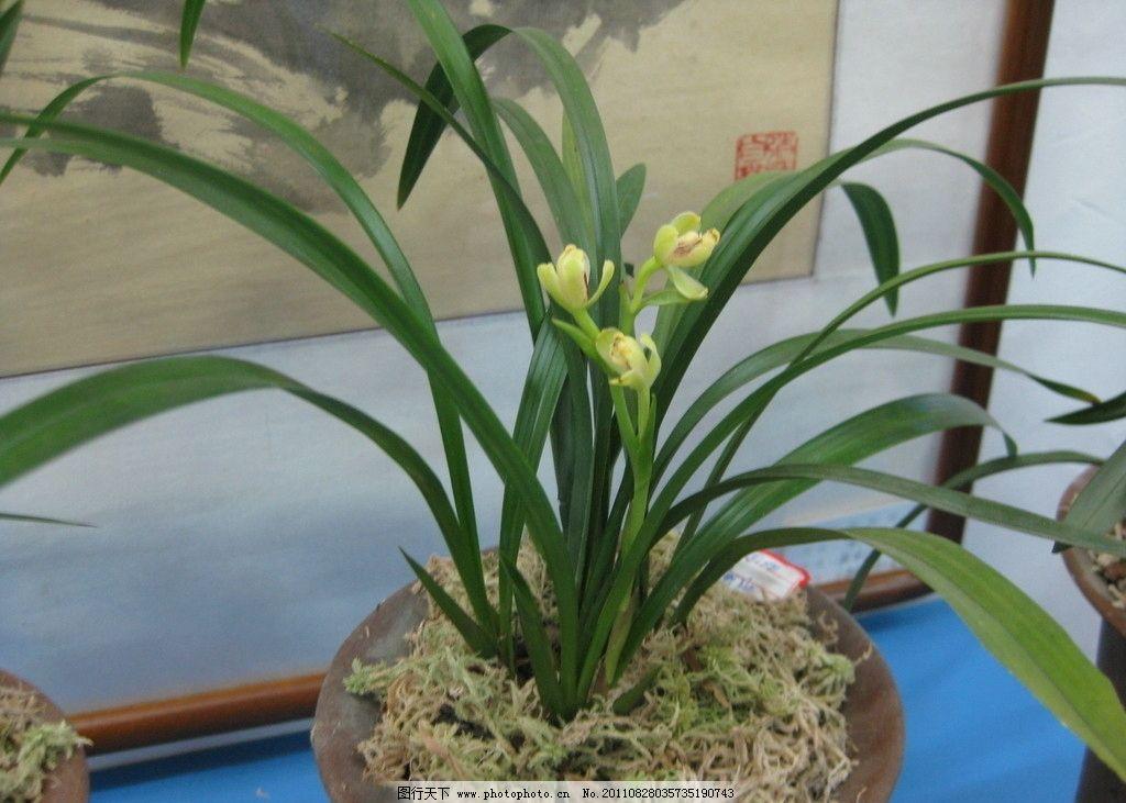 壁纸 花 盆景 盆栽 植物 桌面 1024_731