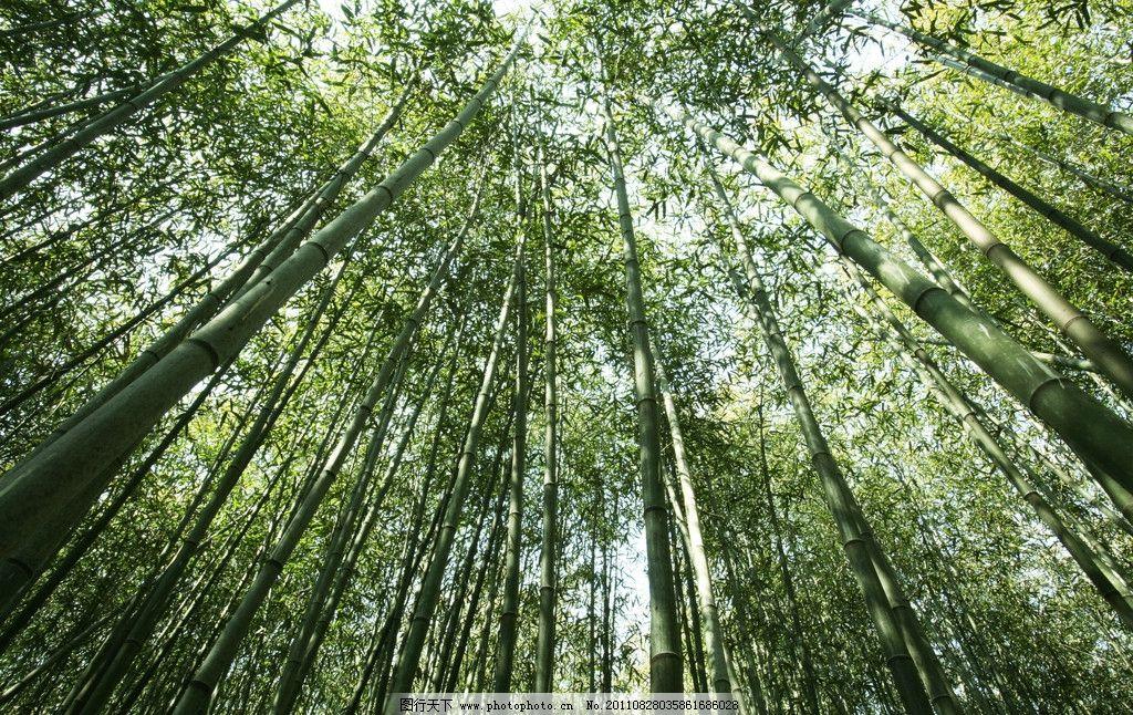 树林 竹林 树木 植物 绿色 树木树叶 生物世界 摄影 72dpi jpg