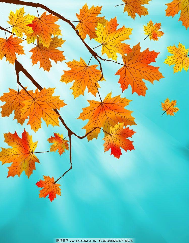 枫叶 红叶 树叶 飘零 飘落 动感 时尚 潮流 梦幻 浪漫 温馨 秋天背景