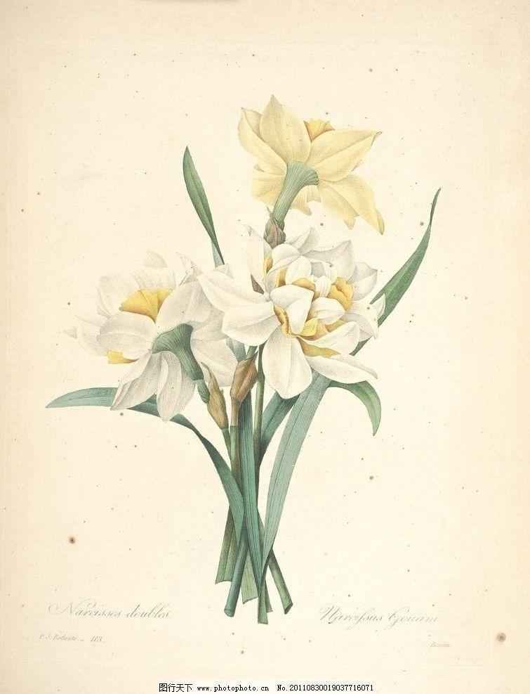 兰花 植物 图谱 手绘 淡彩