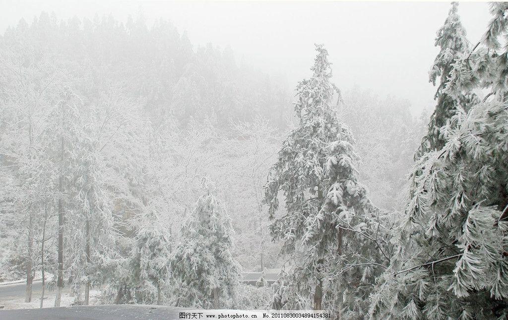 雪景 尧山 雪松 松树 冬雪 冬天 自然风景 自然景观 摄影 300dpi jpg