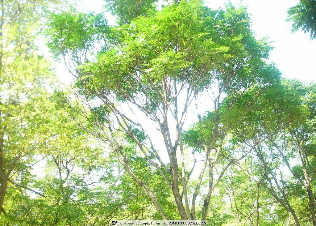 树木 园林 沧州公园 绿树 树枝 树木树叶 生物世界 摄影 300dpi jpg