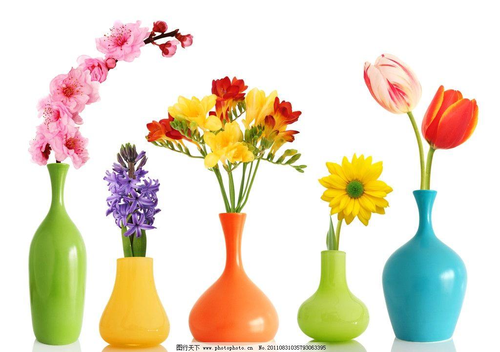 花瓶 菊花 百合花 梅花 花朵 鲜花 花卉 贺卡 卡片 花草 生物世界