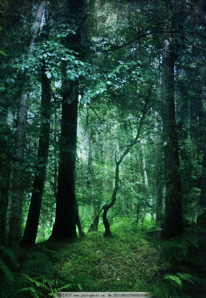 茂密黑森林 茂密 黑森林 参天大树 宁静 幽静 树木树叶 生物世界 摄影