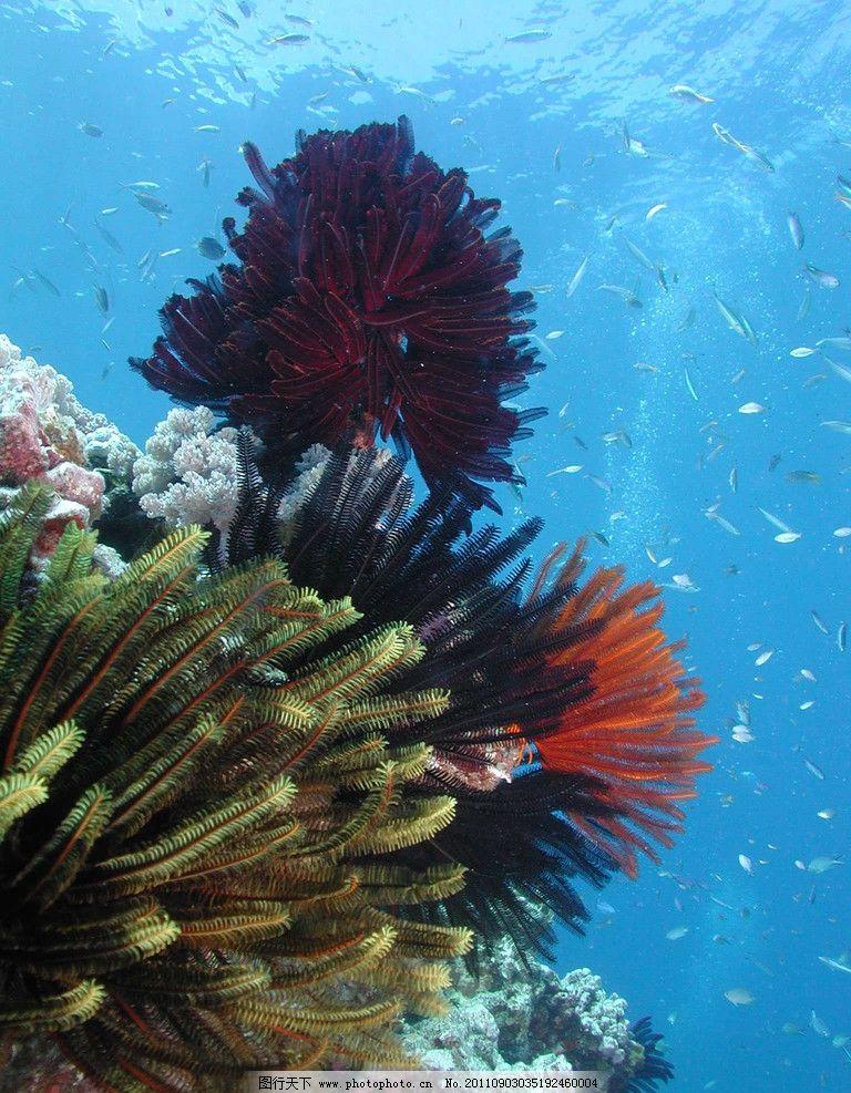 海底世界 水母 海洋 珊瑚 海藻 生物 摄影 梦幻 澳大利亚 鱼