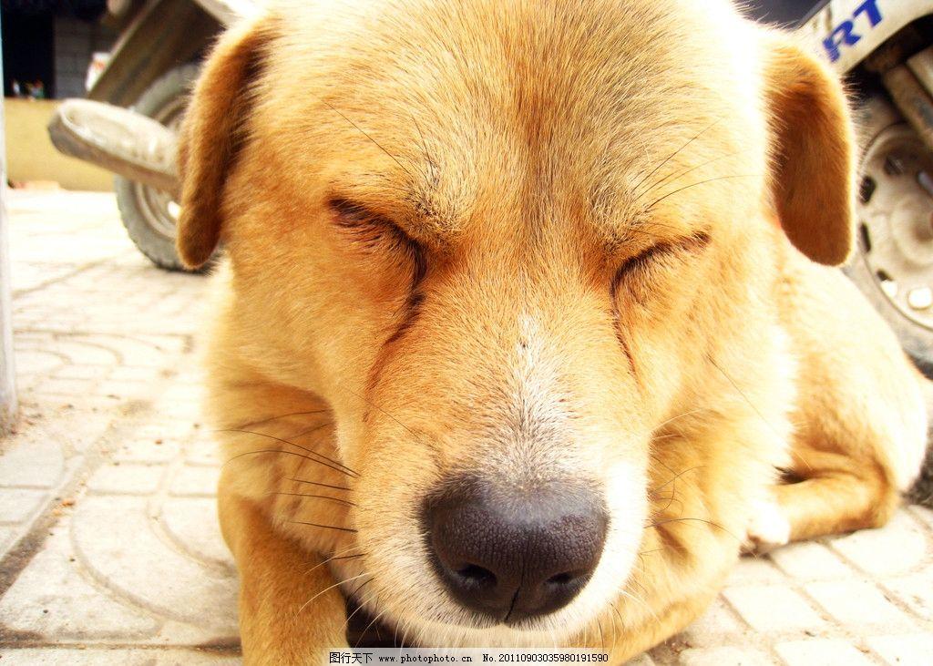 又累又困动物图片