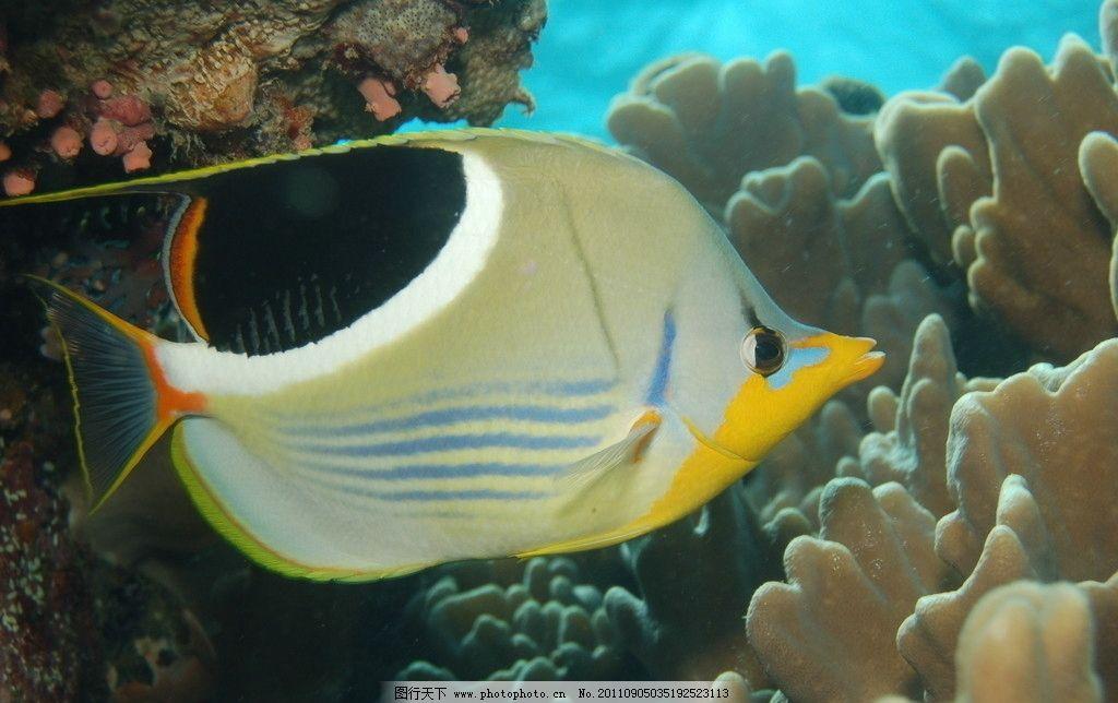 海底世界 海底 假山 鱼 水草 观赏鱼 珊瑚 鱼类 海洋生物 生物世界