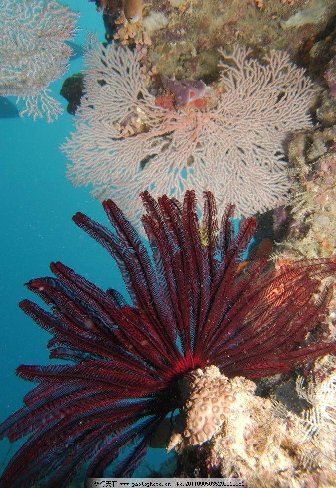 海底世界 假山 水草 珊瑚 碧水 蓝海 鱼类 生物世界 摄影