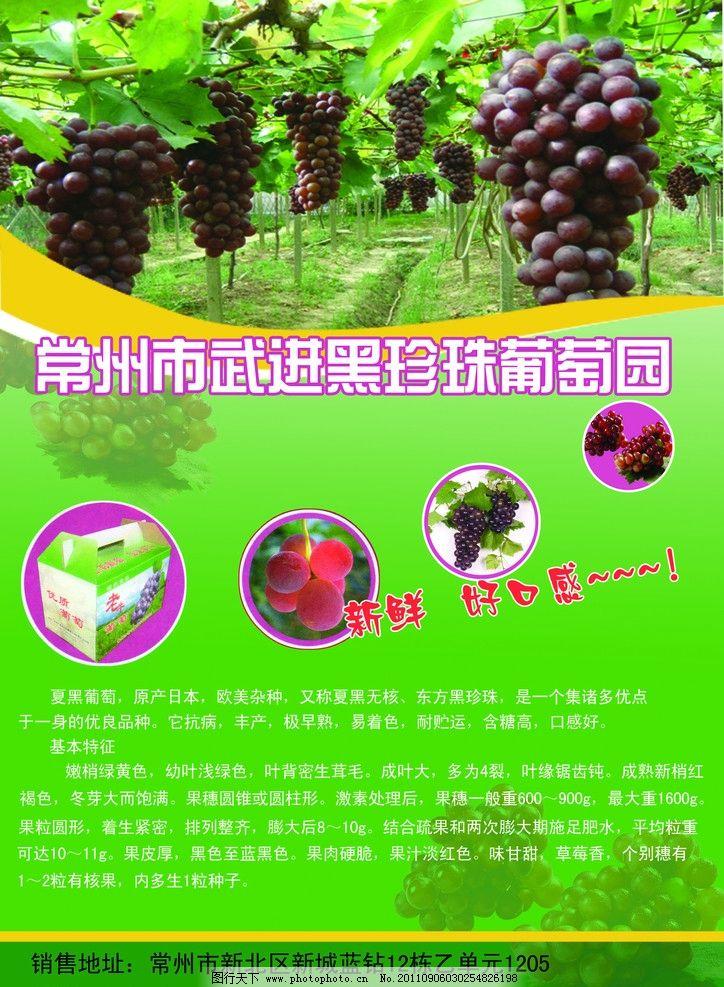 葡萄园宣传单页 水果 绿色 广告设计模板 源文件