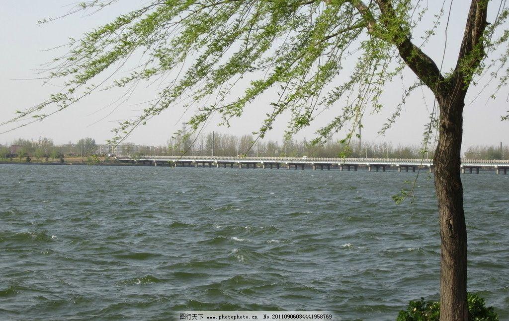 沂河一岸 波浪 大河 沂河 柳树 吹风 山水风景 自然景观 摄影 180dpi