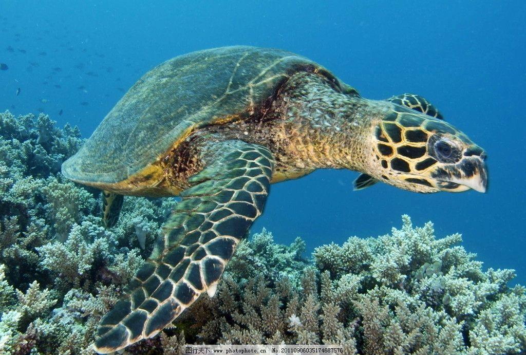 海龟 乌龟 海洋生物 生物世界 摄影