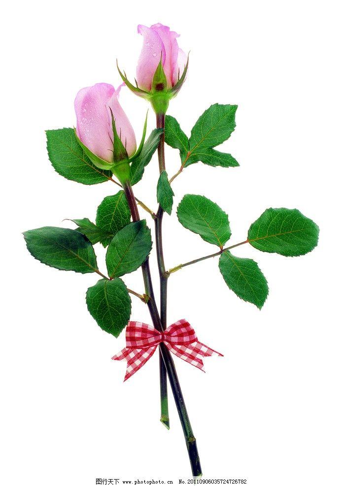 玫瑰花 饰品 花朵 花饰小品 花草 生物世界 摄影 350dpi jpg