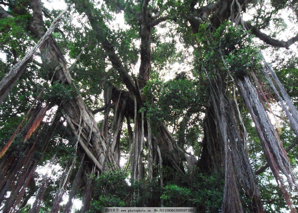 树根树技图片_树木树叶_生物世界_图行天下图库