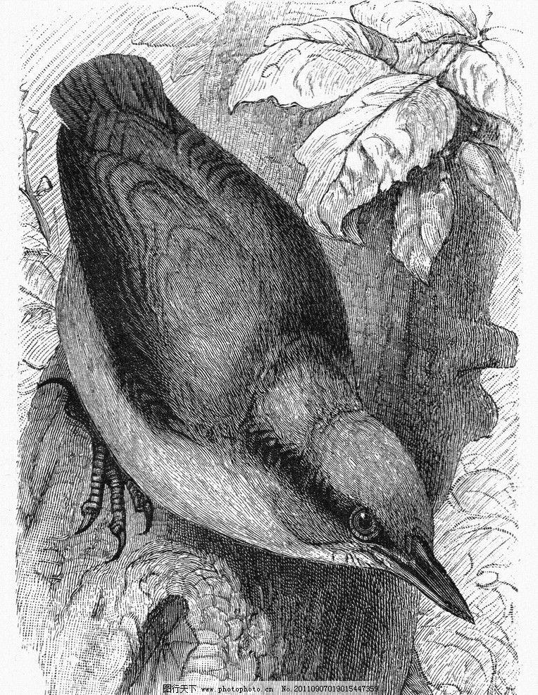手绘鸟 手绘动物 手绘
