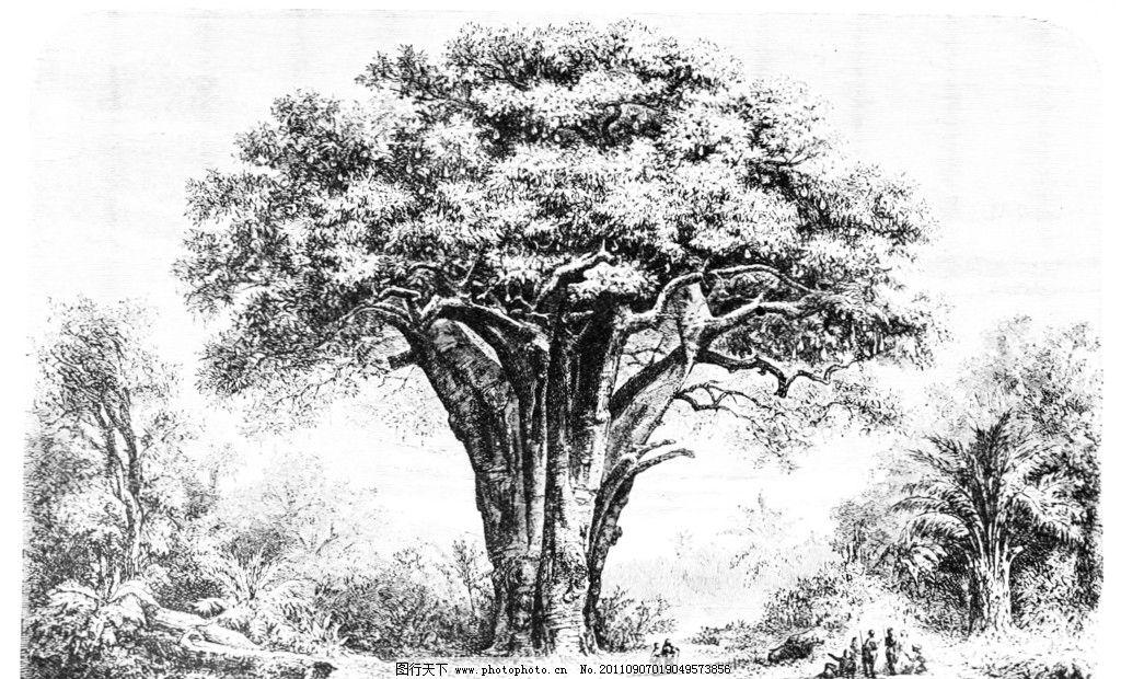 参天大树 素描 大树 绘画