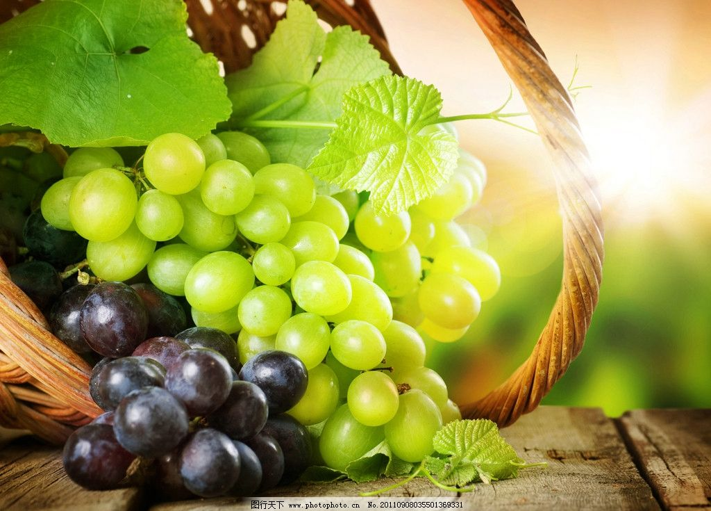 葡萄 葡萄叶 葡萄藤 绿叶 红葡萄 青葡萄 水果 蔬菜 水果高清图片