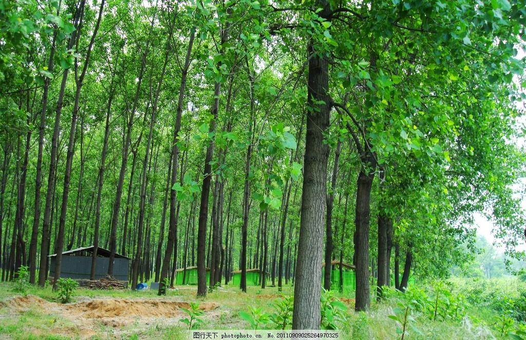 春天树林 绿树 蓝天 白云 森林 树木 树枝 绿叶 茂盛 浓郁