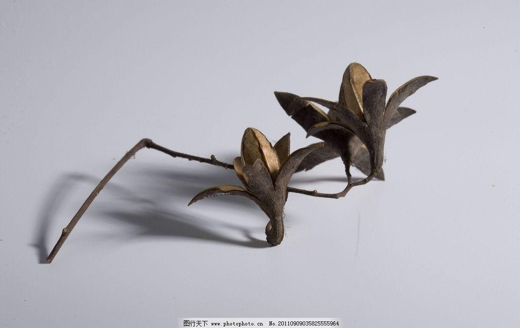 枯花 枯萎的花 花 影子 喇叭花 树木类 树木树叶 生物世界 摄影 350