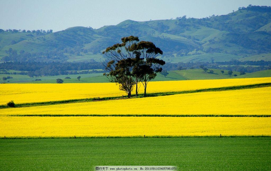 春天的乡村田园图片