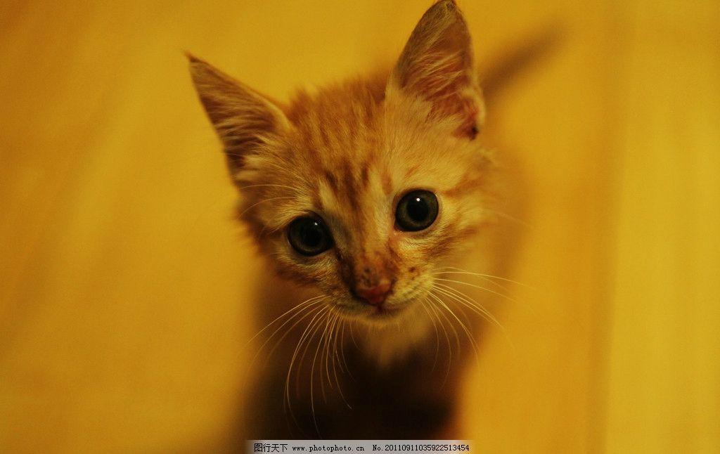 小猫咪 猫 可爱 流浪猫 家禽家畜 生物世界 摄影 72dpi jpg