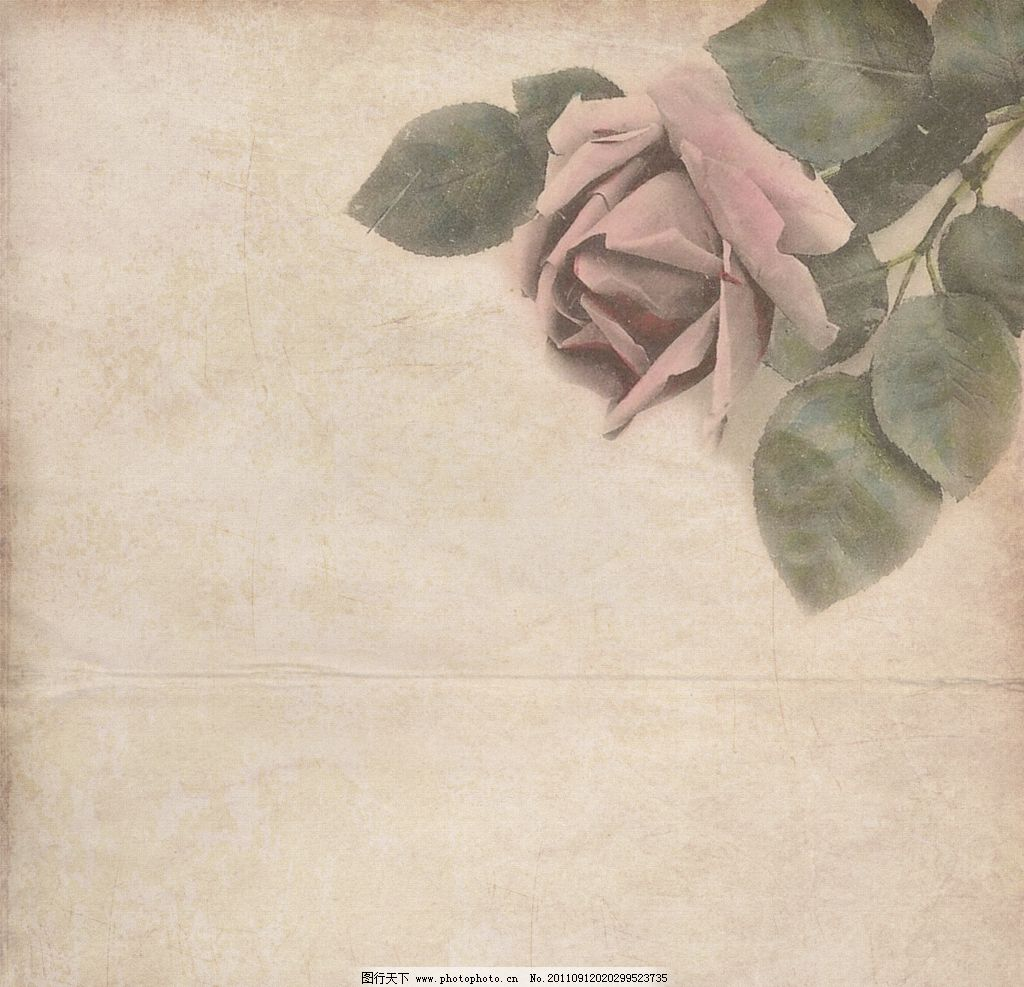 牛皮纸 花卉