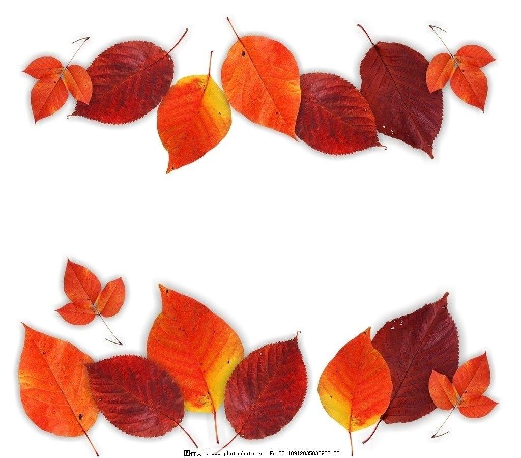 树叶 落叶 叶子 红叶 树叶边框 树叶纹理 树叶背景 树叶底纹 叶脉