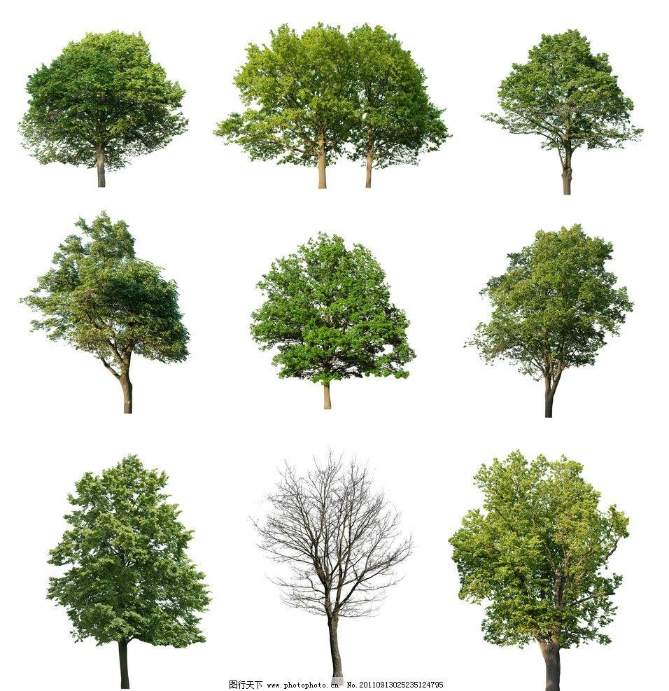 树木 3d贴图 树木材质