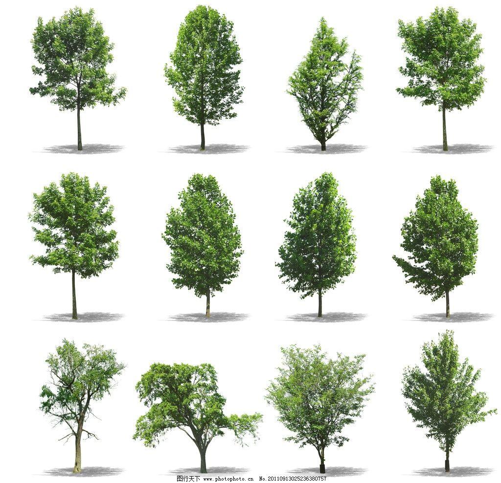 树木 3d贴图 树木材质 绿树 树木树叶 生物世界 设计 300dpi jpg