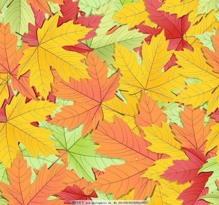 手绘秋天枫叶水珠水滴图片