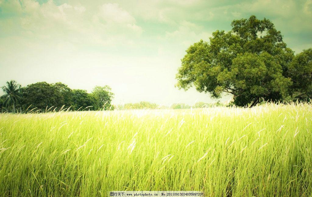蓝天白云青草树木图片_自然风景_自然景观_图行天下