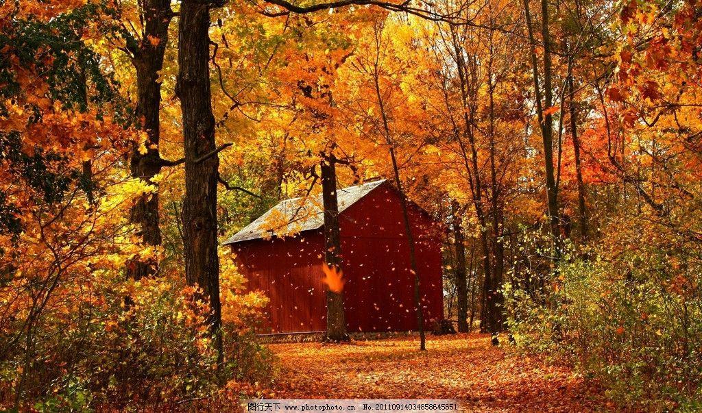 秋天 秋季 秋色 深秋 枫叶 树叶 落叶 树木 自然风景 自然景观