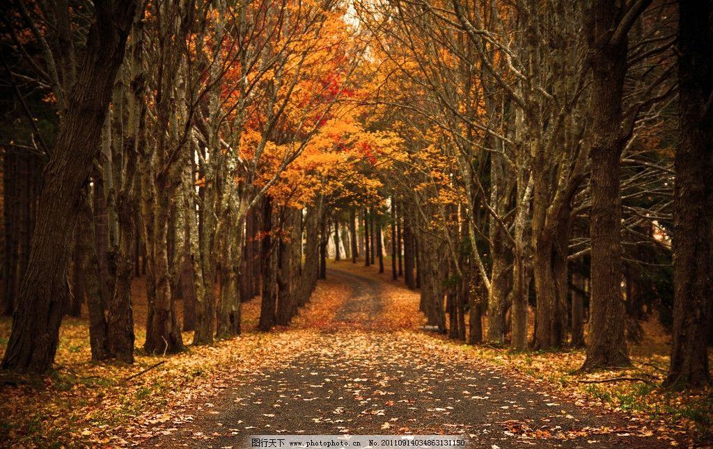 林中小路 秋天 秋季 秋色 深秋 枫叶 树叶 落叶 树木 自然风景