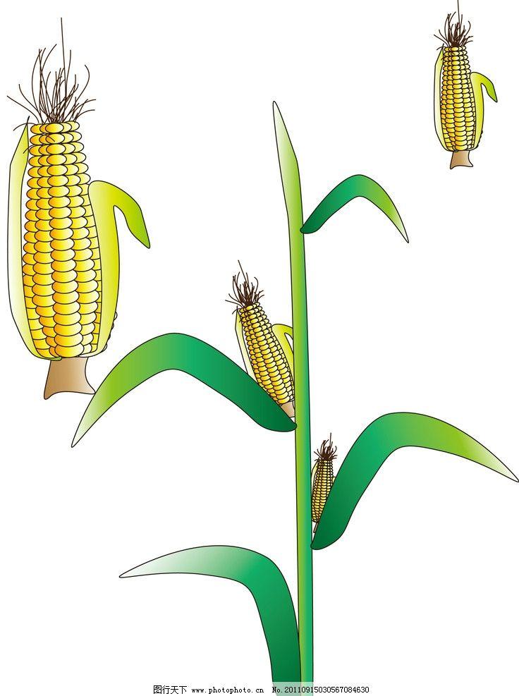 玉米 黄色玉米 绿色叶子 卡通设计 广告设计 矢量 ai
