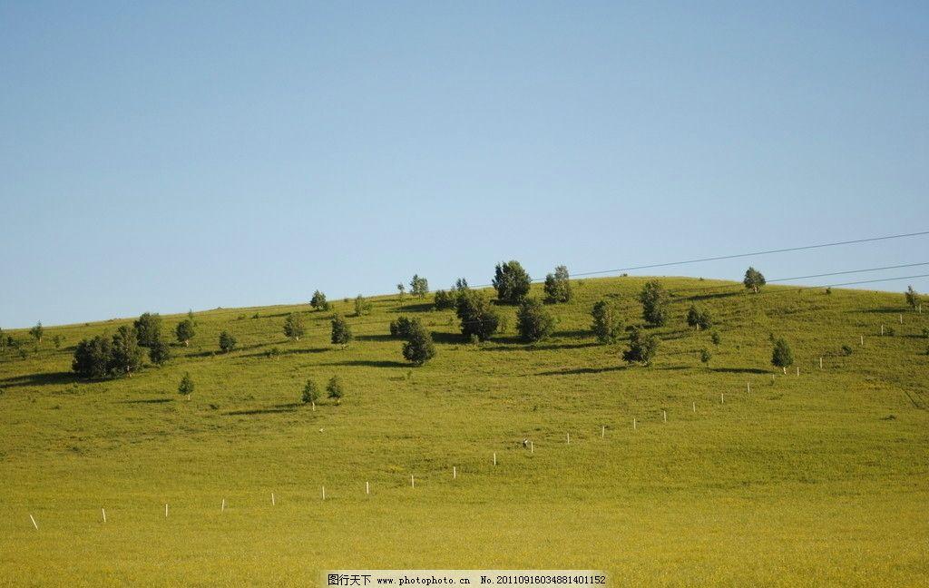 草原 草地 蓝天 小树 草原风景 自然风景 自然景观 摄影 300dpi jpg