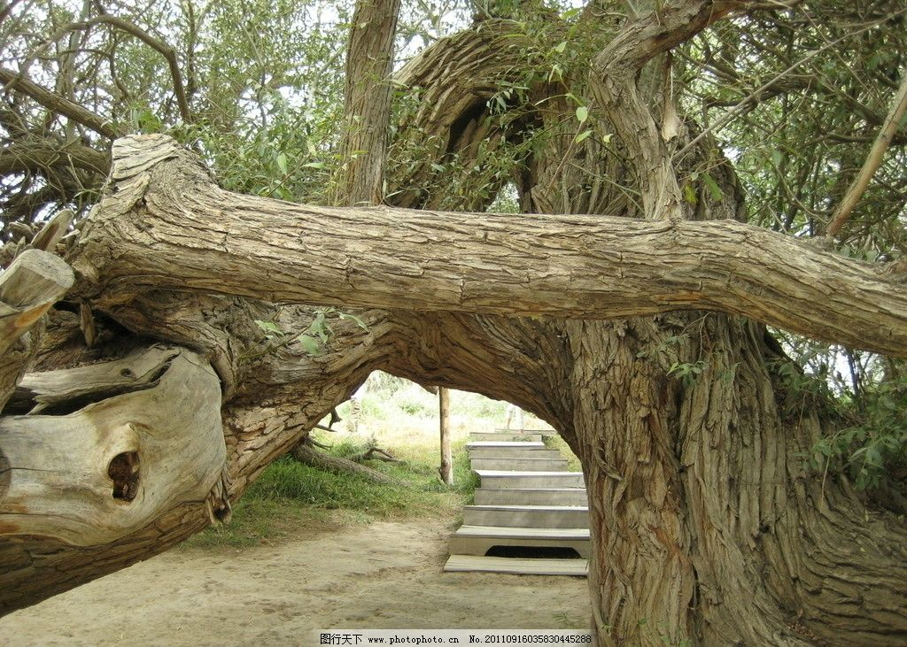 怪异树木图片