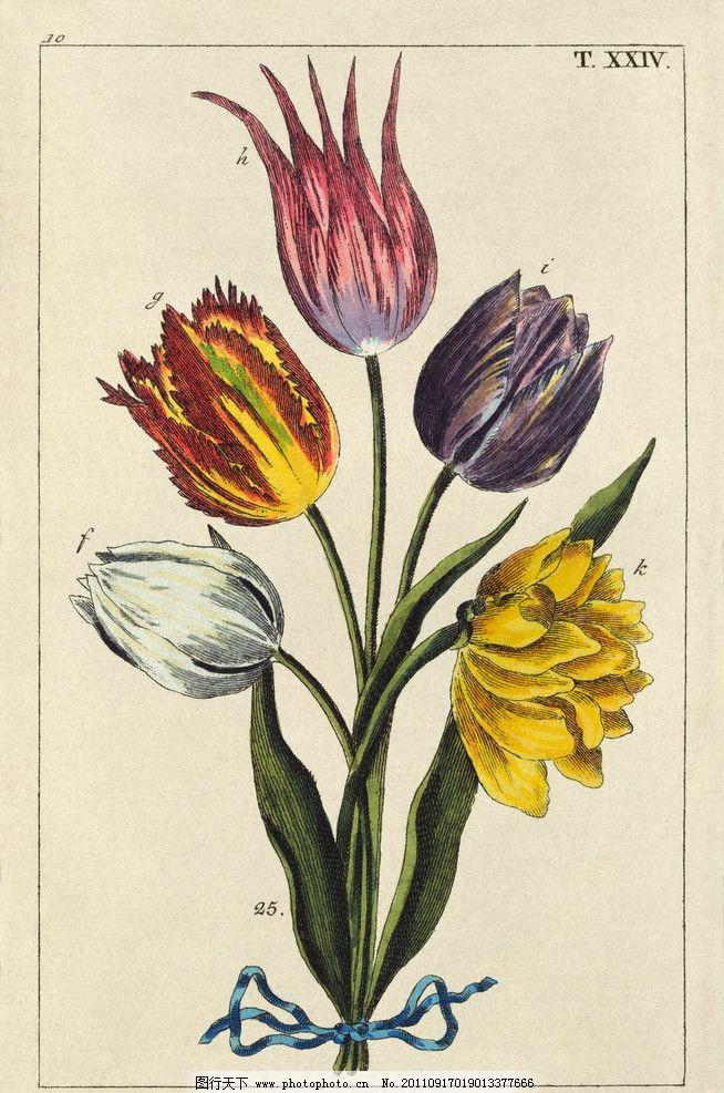 手绘百合 手绘花纹花卉 手绘花卉 百合花 绘画 绘画书法 文化艺术