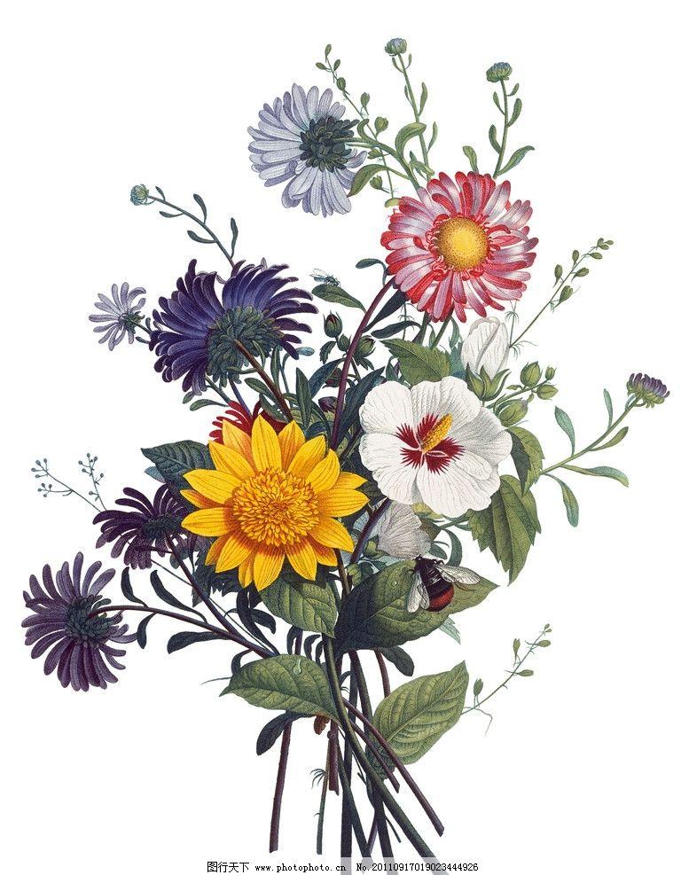 手绘菊花 手绘花卉 菊花 花卉 绘画 手绘花纹花卉 绘画书法 文化艺术