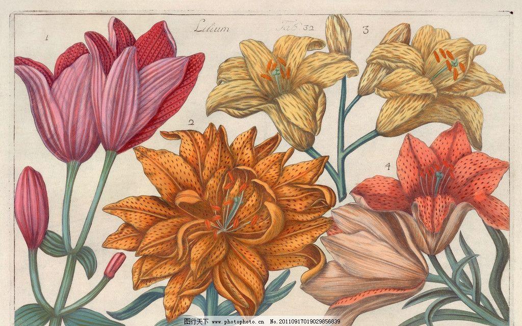 手绘百合花 手绘花卉花朵背景 手绘 线描 花卉 百合花 花朵 花纹 叶子