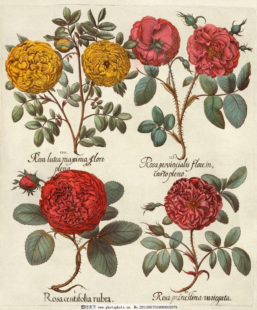 手绘花卉花朵背景 手绘 线描 花卉 菊花 花朵 花纹 叶子 纹样 古典