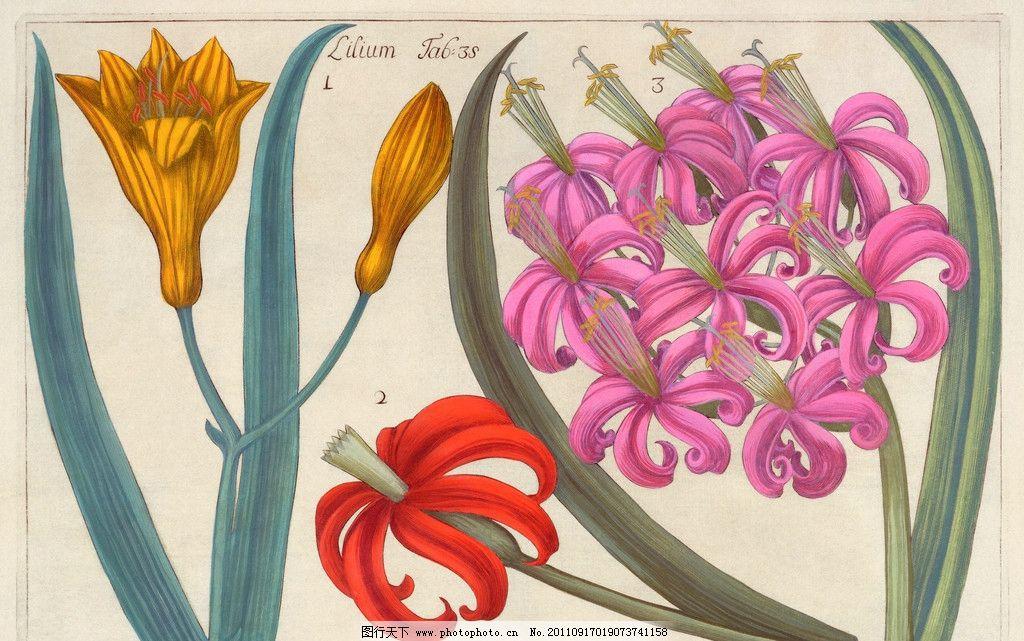 手绘百合 手绘花卉花朵背景 线描 百合花 花纹 叶子 花卉底纹背景