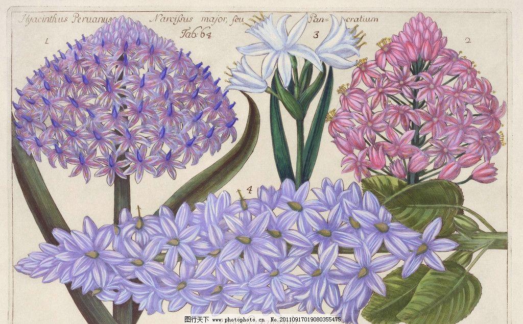 手绘百合 手绘花卉花朵背景 手绘 线描 花卉百合花 花朵 花纹 叶子