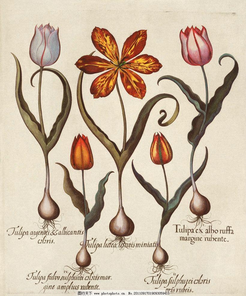 手绘花卉花朵背景 手绘 线描 花卉 百合花 花朵 花纹 叶子 纹样 古典