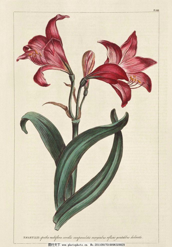 手绘花卉花朵背景 手绘 线描 花卉百合花 花朵 花纹 叶子 花卉底纹
