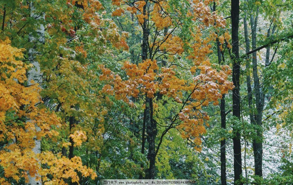 树叶 绿叶 绿 叶 绿色 枫树 枫叶 树木树叶 生物世界 树木 叶子 摄影