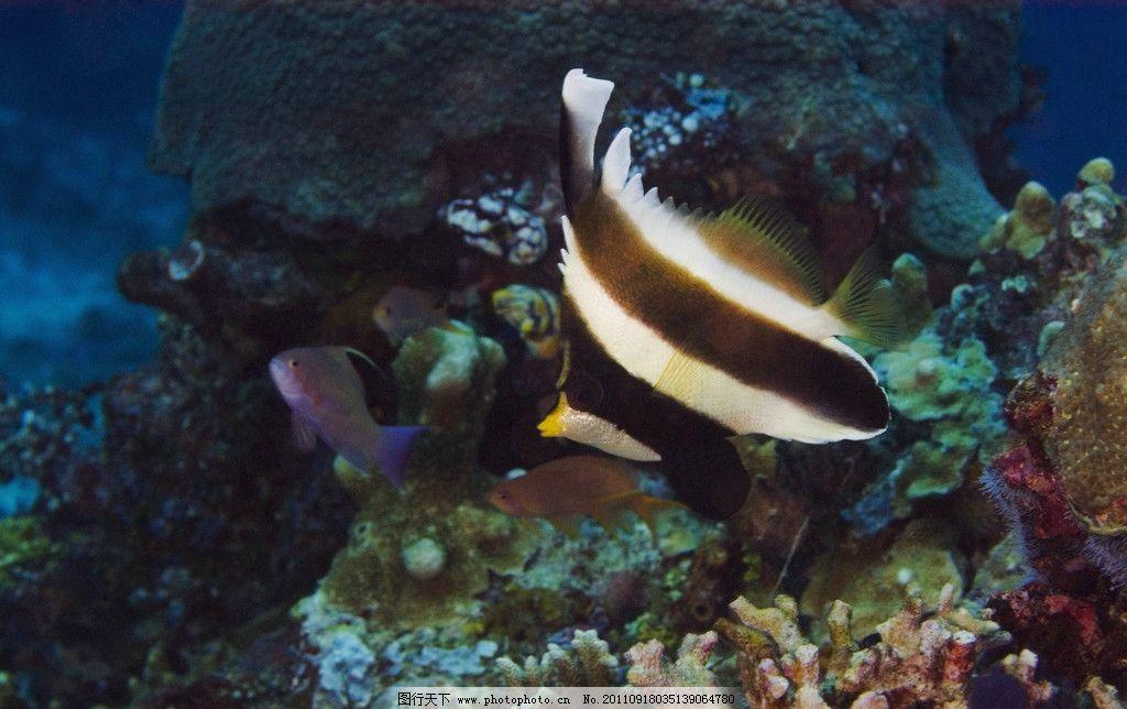 壁纸 动物 海底 海底世界 海洋馆 水族馆 鱼 鱼类 1024_644